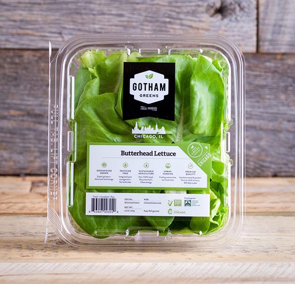 Butterhead Lettuce CHI 02